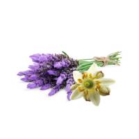 fleur de Menthe